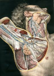 A Picture Of The Human Anatomy Best 25 Anatomy Ideas On Pinterest Anatomy Reference Human