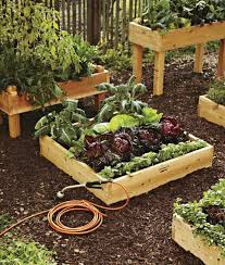 backyard vegetable garden design ideas