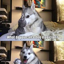 Pun Meme - pun dog strikes again by dreaddy meme center