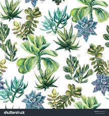succulents hand painted background seamless pattern stock