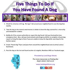 lost dogs illinois home facebook