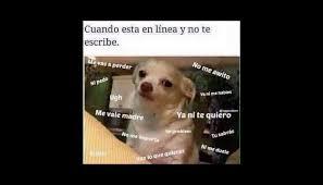 Memes De Chihuahua - no seas mamon chihuahua meme seas best of the funny meme