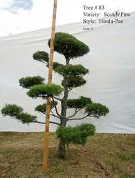 plants beautiful nursery minnesota live topiary trees and