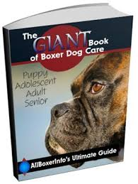 boxer dog howling boxer dog separation anxiety