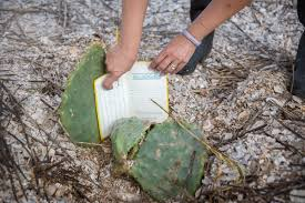 native plant society of texas on the ground with audubon texas after hurricane harvey audubon