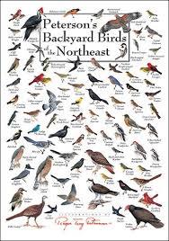 Nc Backyard Birds 19 Best Wildlife Identification Charts Images On Pinterest