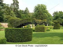 Yew Topiary - stock photo of peacock topiary yew topiary sculptured trees in