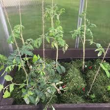 my new polytunnel greenhouse palram bella growerflow