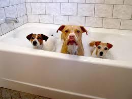 Resurface Fiberglass Bathtub Fiberglass Bathtub Reglazing Maryland Washington Dc N Va