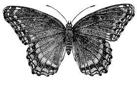 vintage butterfly free vintage