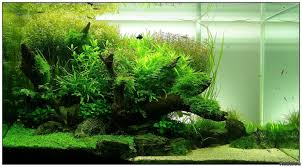 Aquascape Layout 90x50x50 Layout 4 Flowgrow Aquascape Aquarium Database