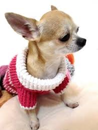 dog sweater for small dog free knitting pattern puppy clothes