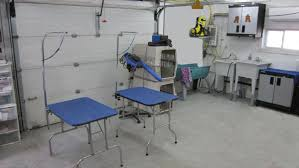 used dog grooming table grooming your poodle