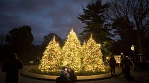 nyc christmas trees public lightings viewings and more am new york