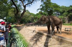 ospiti la gabbia ospiti allo zoo alimenta un elefante in una gabbia ho chi minh