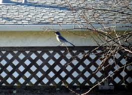 backyard bird watching following footprints