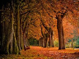 autumn vanilla picture autumn scenery