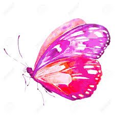 pink butterfly watercolor isolated on a white royalty free