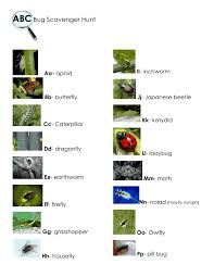 abc bug scavenger hunt pdf bugs insects and spiders pinterest