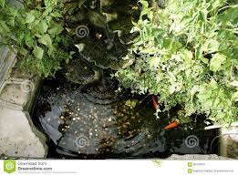 fish ornamental fish pond fish pond with coins stock photo