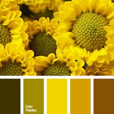 warm yellow warm yellow color color palette ideas
