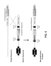 directly transplanting of native monocots from donor areas to patent us20060253918 targeted integration and stacking of dna