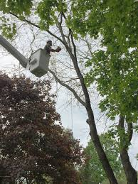 dutchess county tree removal pruning cabling fertilizing