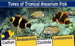 aquarium fish types