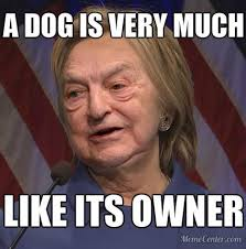 Dog Owner Meme - a dog is very much like its owner soros hillary hilldawg