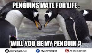 Cute Penguin Meme - penguin memes