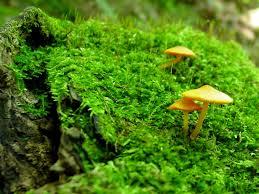 wiseacre gardens blog archive mushroom wallpaper