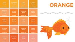 Different Color Oranges