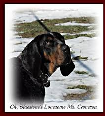 bluetick coonhound puppies indiana bluestone blueticks old fashioned bluetick coonhound puppies in wv