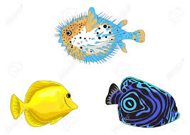 tropical fish illustrations isolated on white background royalty