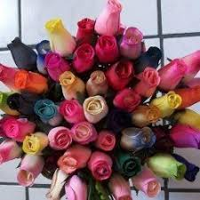 Different Color Roses Die Besten 25 Meaning Of Tulips Ideen Auf Pinterest