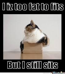Fat Cat Heavy Breathing Meme - fat cat meme cat best of the funny meme
