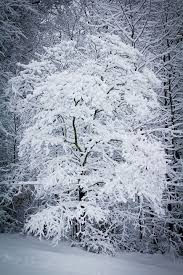 free photo weather snowing tree winter snow snowstorm snowy max