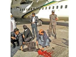journalists jobs in pakistan airlines international pia looned for bizarre goat slaughter the express tribune