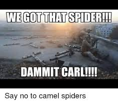 Cute Spider Meme - wegot that spider dammit carl say no to camel spiders
