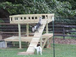 goat playground babygoatfarm should be able to do these with