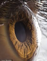 Picture Of Eye Anatomy The Eyes Have It The Iris Pictured In Remarkable Detail By