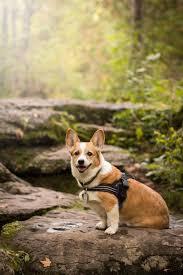 Comfort Flex Dog Harness Comfortflex Home Facebook