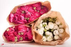Ranunculus Flower Ranunculus Care And Handling Flower Muse Blog