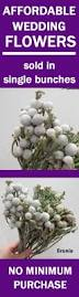 51 best brunia silver wedding flowers images on pinterest silver