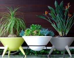australian native indoor plants the planthunter u2013 directory
