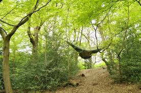 portable tree houses work in any environment and don t require