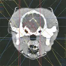 Brainstem Mass Current Concepts Progress Notes