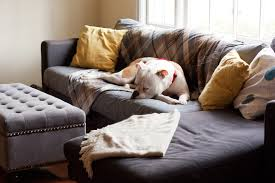 Dog Sofa Cover by Couch Potato 101 As Taught By 10 Of The Laziest Dogs You U0027ll Ever