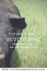 358 best pigs images on pinterest homestead survival backyard