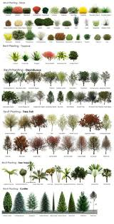 Garden Tree Types - best 25 privacy trees ideas on pinterest privacy landscaping
